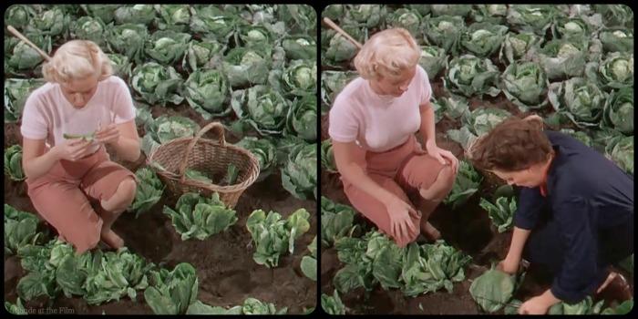 Summer Stock Garland cabbage