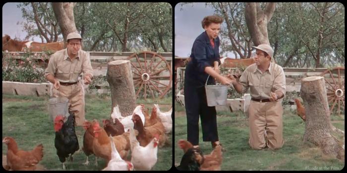 Summer Stock Kelly Silver chickens