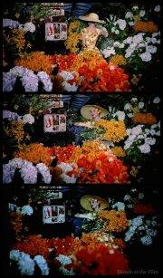 Funny Face Hepburn flowers